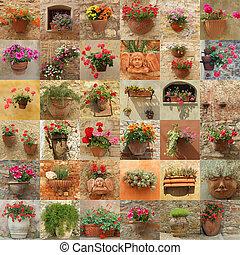 牆, 做, ......的, 很多, 圖像, 由于, 花, 在, 罐, italy, 歐洲