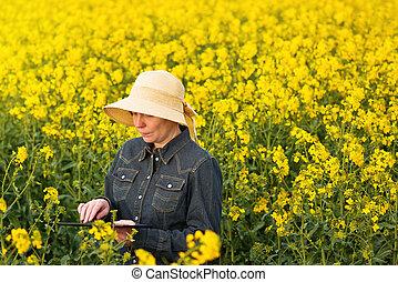 片劑, 農夫, oilseed, 油菜籽, 女性, 數字, 培養