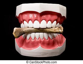 牙齒, 以及, 骨頭