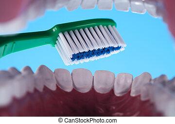 牙齒, 牙齒的健康, 關心, 對象
