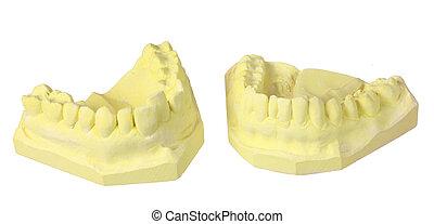 牙齒, 牙齒, 模具