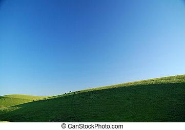 牛, 在上, a, 阳光充足, 山坡