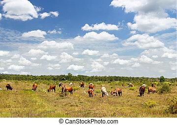 牛, 牧草地, 夏
