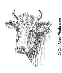 牛, 顔, 背景, 引かれる, 白, 手