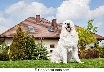 牧羊犬, モデル, 大きい, house., 犬, 監視, tatra, 前部, ポーランド語