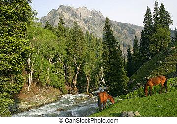 牧草を食べている馬