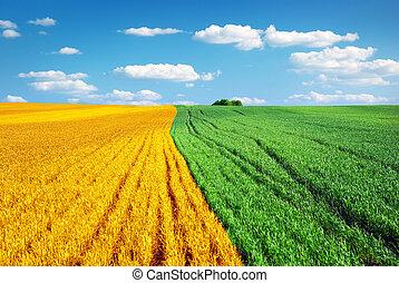 牧草地, カラフルである