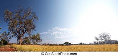 牧草地, サバンナ, アフリカ