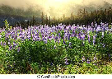 牧草地, 上に, アラスカ