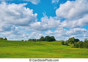 牧草地 土地