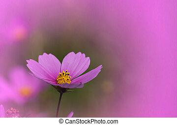 牧草地, 夏, 野生の花