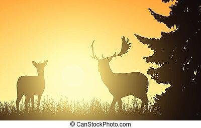 牧草地, 太陽, 鹿, 木, の後ろ, 上昇, 背景, 後部