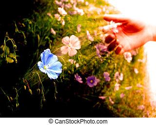 牧草地, 日光, 朝, 早く, 野生の花, 盗品