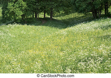 牧草地, 春