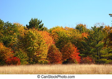 牧草地, 秋