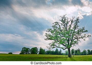 牧草地, 空, 木, 曇り, 単一, 緑, 日没