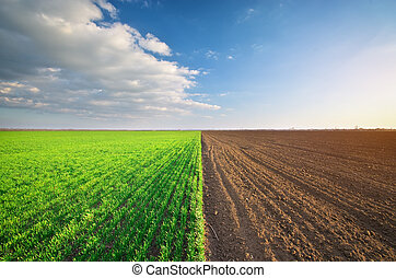 牧草地, 耕される