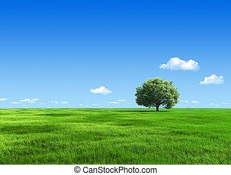 牧草地, 自然, 木, -, コレクション, 1, 緑, テンプレート, 6000px