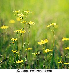 牧草地, 花, クローズアップ