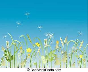 牧草地, 草, 花