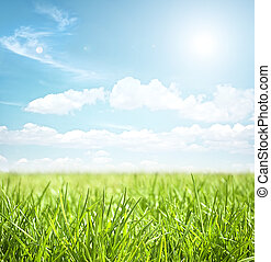 牧草地, 風景, 中に, 夏