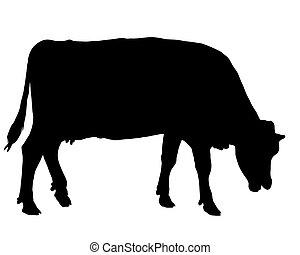 牧草, 牛