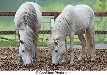 牧草, 馬, スイス人, 夏, 白, アルプス