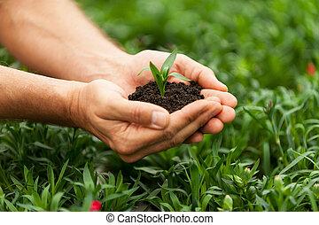 特寫鏡頭, 植物, 綠色, 扣留手, 新, 男性, life.