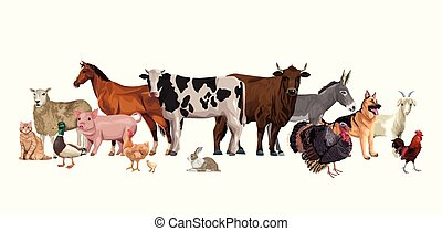 特徴, グループ, 家畜