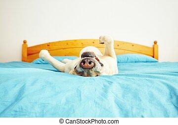 犬, あること, ベッド