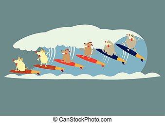 犬, ある, サーフィン, ∥ために∥, 夏