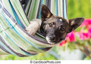犬, ぐっと近づいて, しまのある, hammock., あること, 幸せ