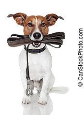 犬, ∥で∥, 革, 革ひも