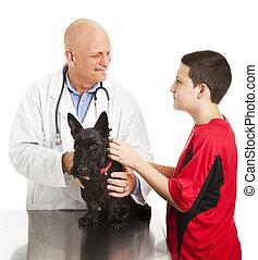 犬, について, ∥自信を持たせる∥, 獣医, 十代