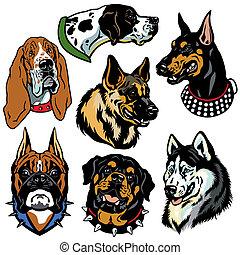 犬, アイコン, 頭, セット