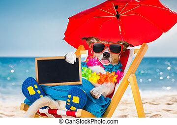 犬, シエスタ, 上に, 浜の 椅子