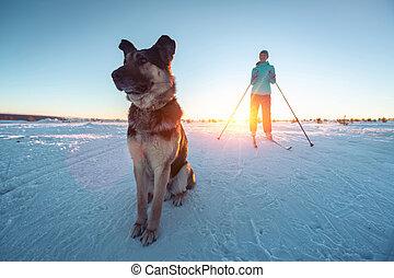 犬, スキー