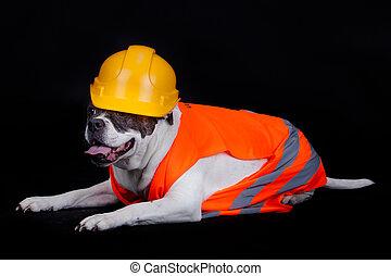 犬, 下に, construction., 建設 中, concept.