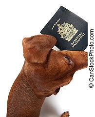 犬, 保有物, pasport, 中に, 口