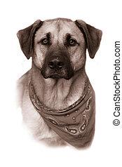 犬, 品種, セピア, 混ぜられた, 大きい, 型