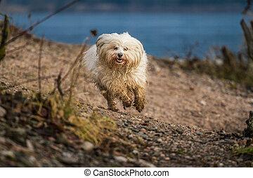 犬, 堤防