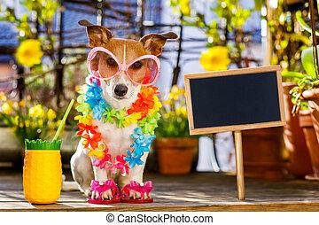 犬, 夏季休暇, 休暇, 上に, バルコニー