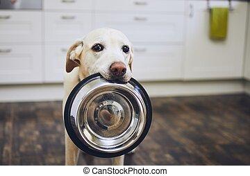 犬, 待つこと, 供給
