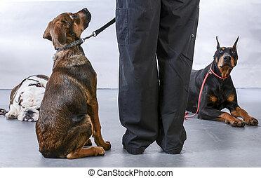 犬, 服従, クラス