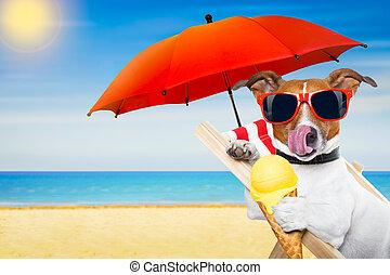犬, 浜の 椅子