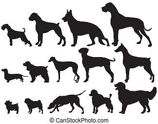 犬, 犬, 品種