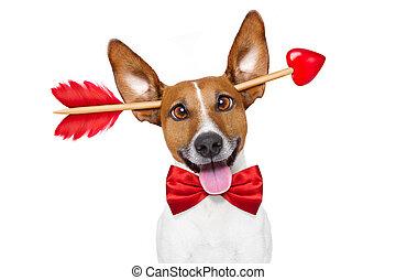 犬, 狂気, バレンタイン, 愛