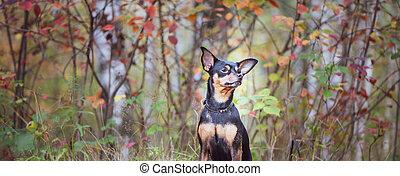 犬, 立つ, 絵のよう, 痛みなさい, forest., 秋, 肖像画, 理想, データ, テリア, dog.