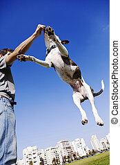 犬, 跳躍, ∥ために∥, 食物