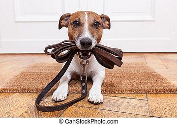 犬, 革, 革ひも